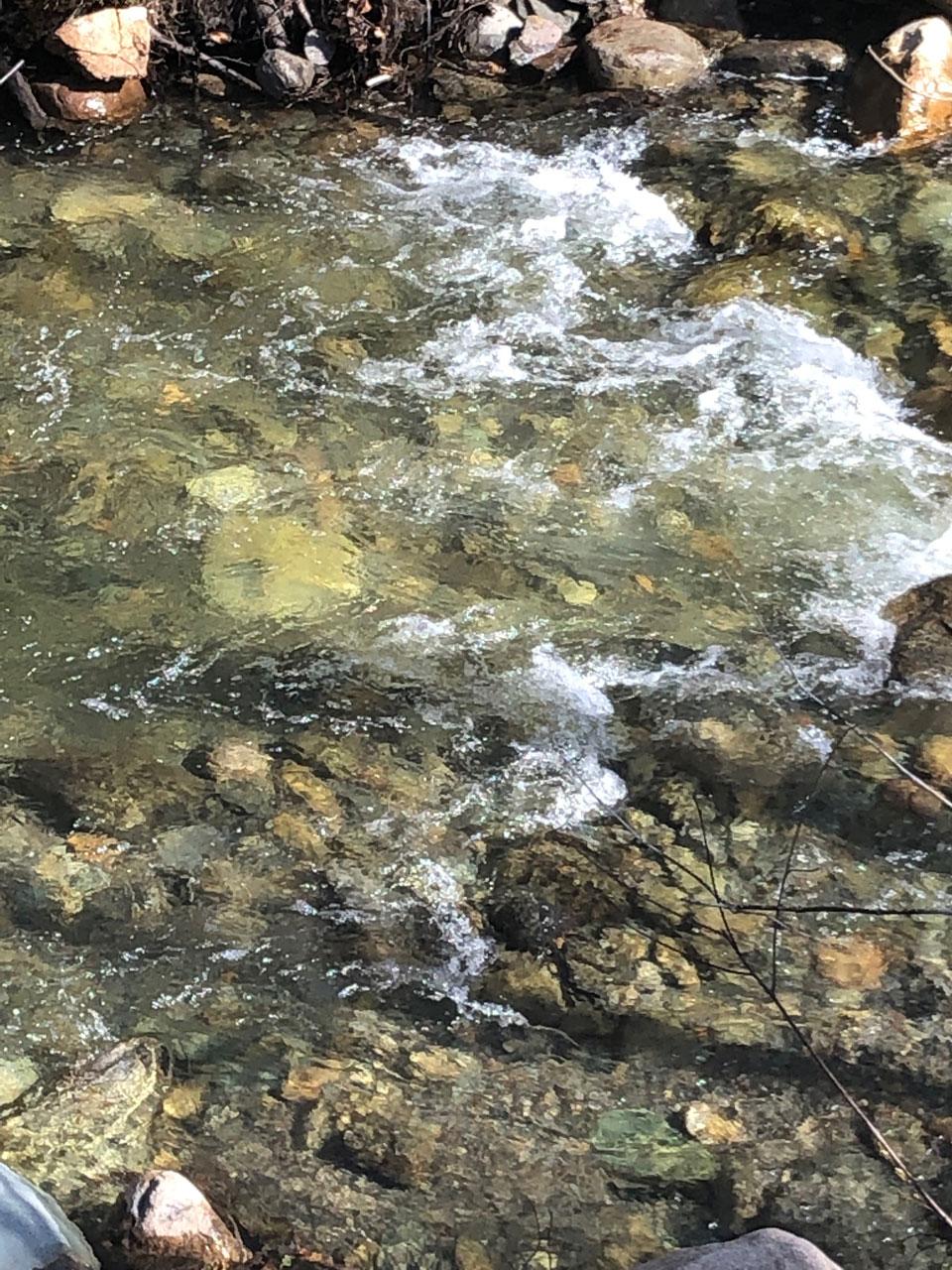 Baignade dans la rivière à l'eau limpide